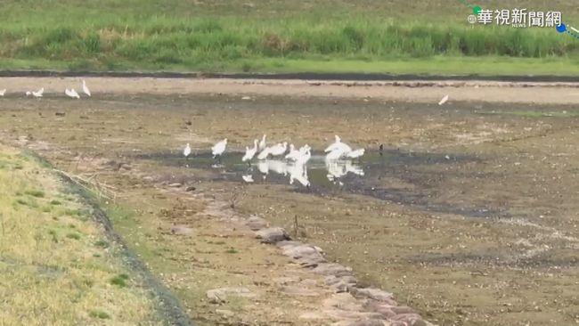 湖乾涸淪爛泥 「湖畔第一景」美景變調