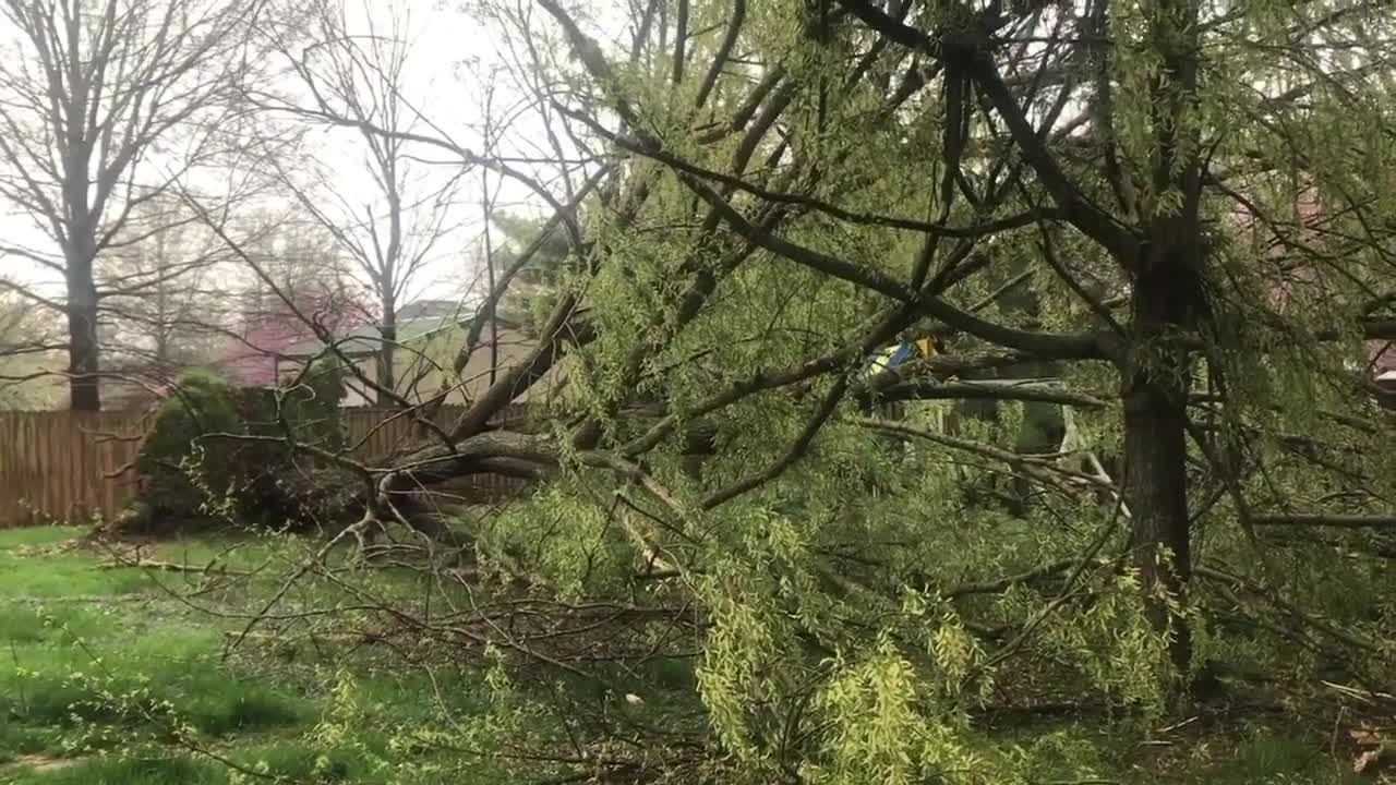 news.yahoo.com: Massive Tree Uprooted During Severe Storm in Missouri