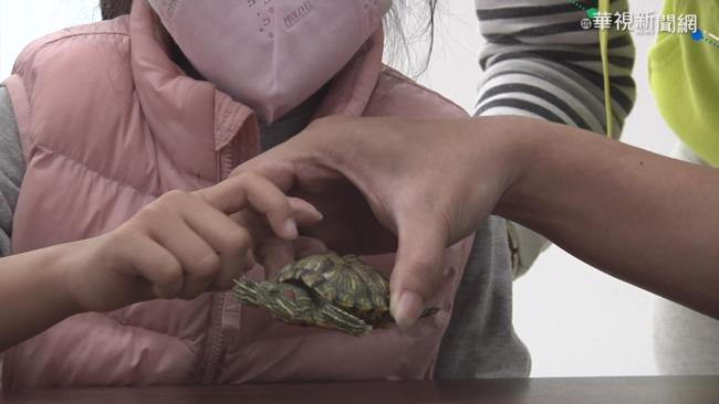 童玩寵物龜沒洗手 引發腸胃炎高燒
