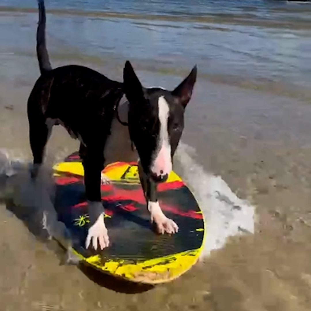 www.yahoo.com: Meet Rufus, the coolest surfing dog