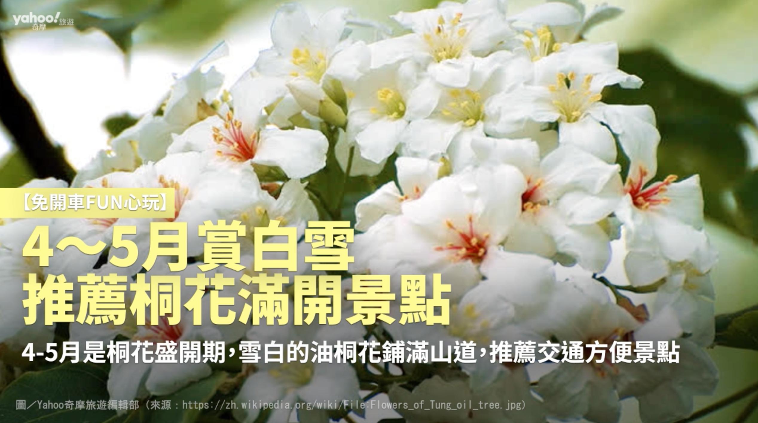 【免開車fun心玩】4~5月賞白雪 推薦桐花滿開景點