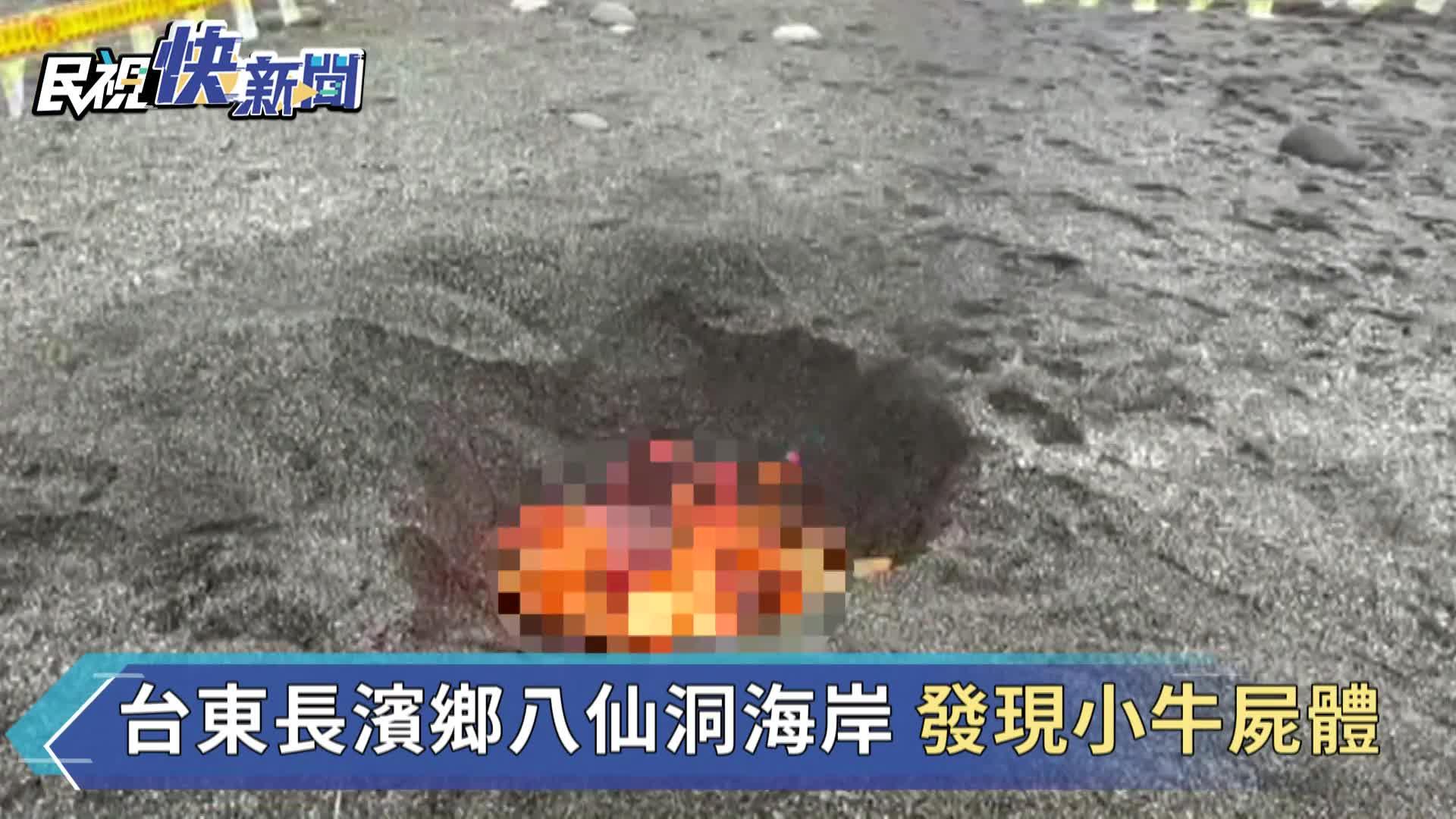 快新聞/台東長濱發現小牛屍體 海巡署確認「無牛結節疹」