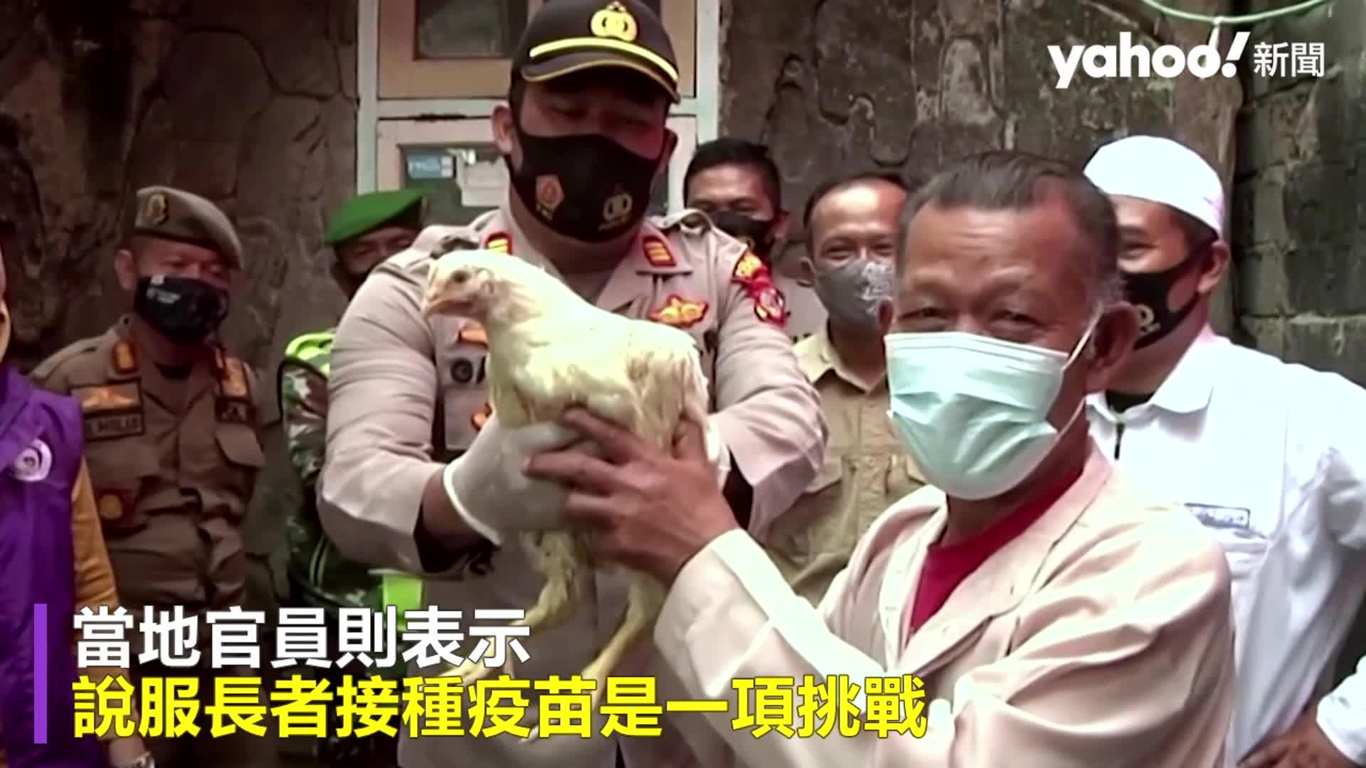 印尼送雞泰國送牛!接種疫苗「活體」獎勵 老人超嗨