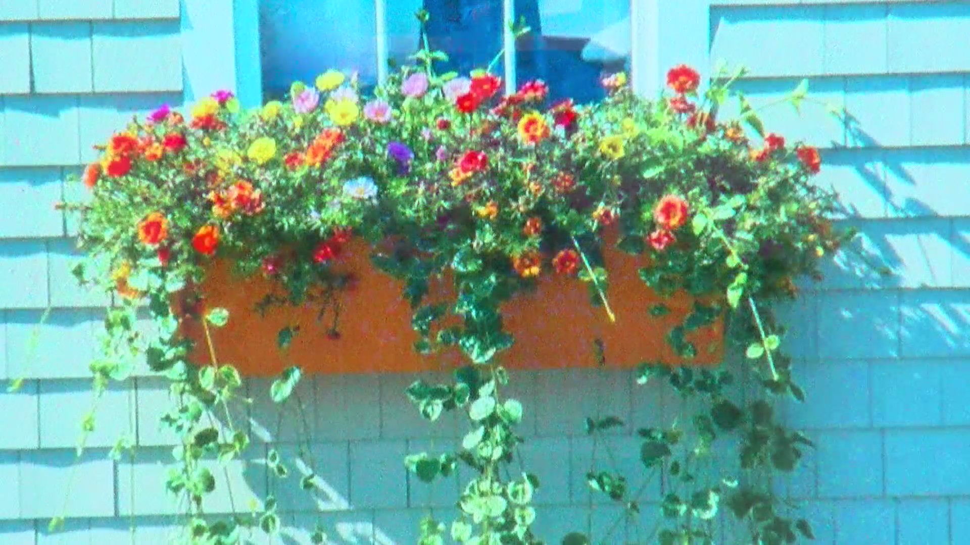 Photo of DIY With Rebecca: Remaking Window Boxes
