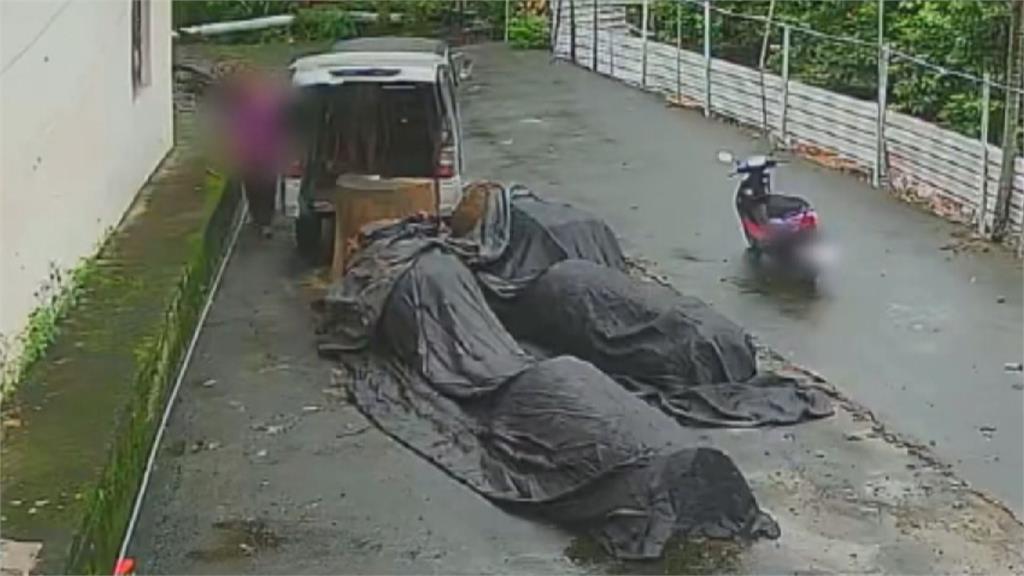 竊取珍貴牛樟木被逮 三嫌觸法最重可判七年