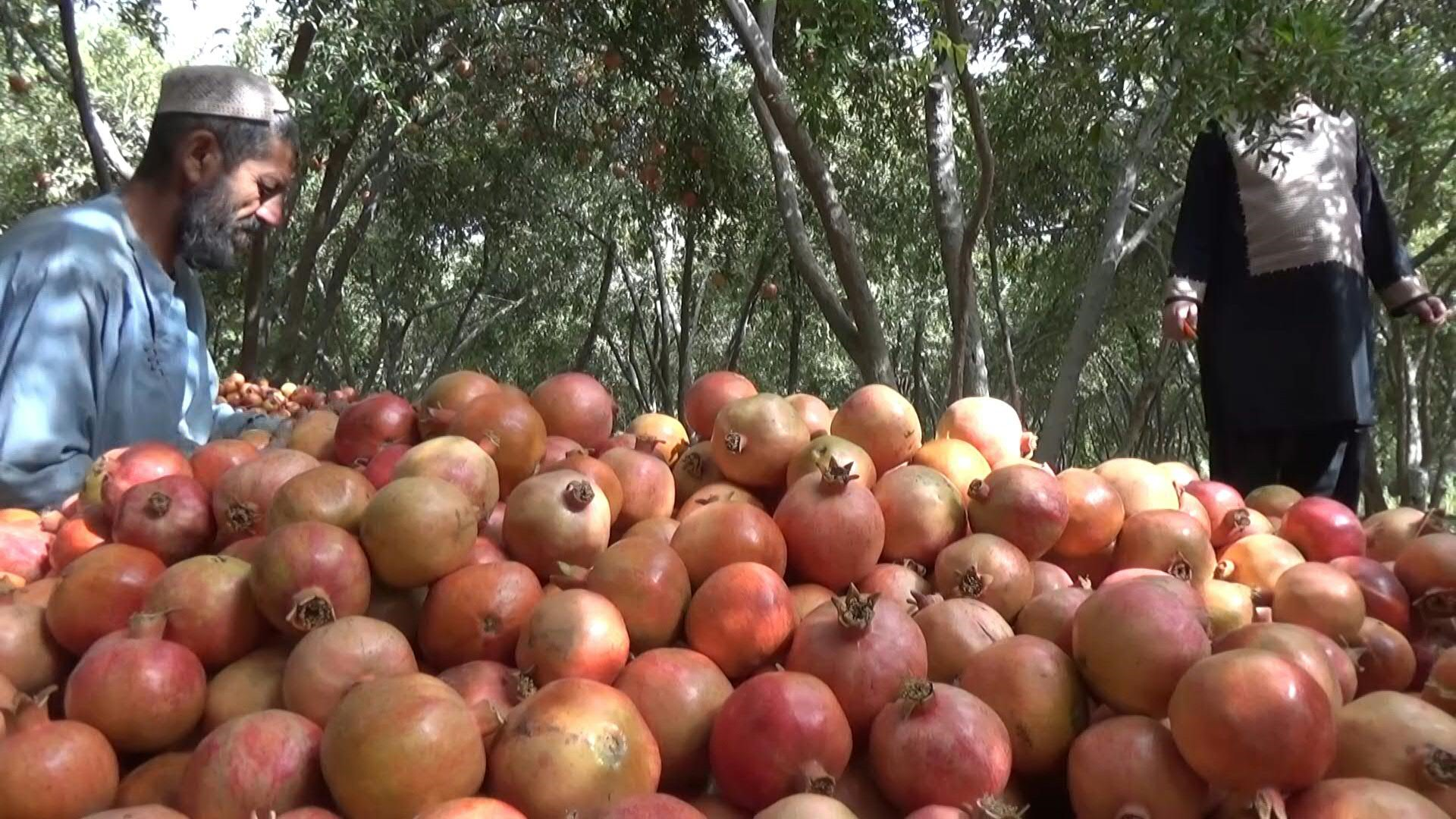 Afghan pomegranates under threat from Pakistan border closures