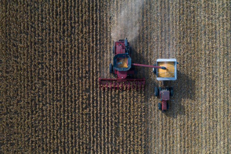 EEUU vende cantidad récord de maíz a China, en medio de aumento de tensiones