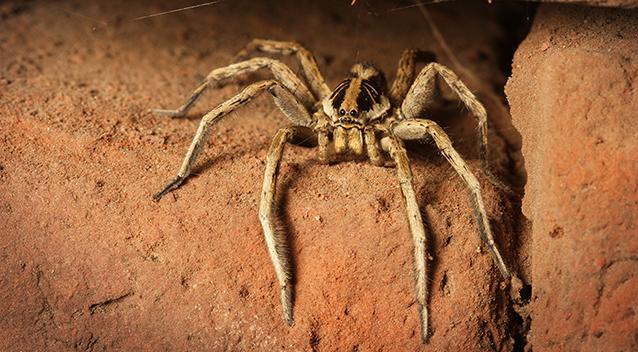 Man's attempt to torch spider turns into unmitigated disaster