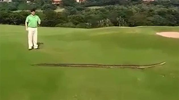 Ginormous snake invades golf course in South Africa
