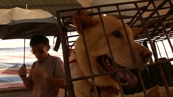 Dog meat festival draws fans and opponents