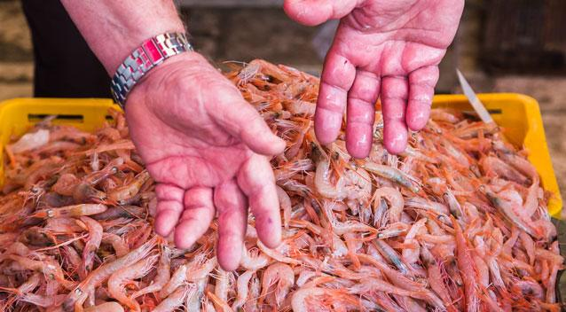 Prawn shortage: Prices to reach $50 a kilo by Christmas
