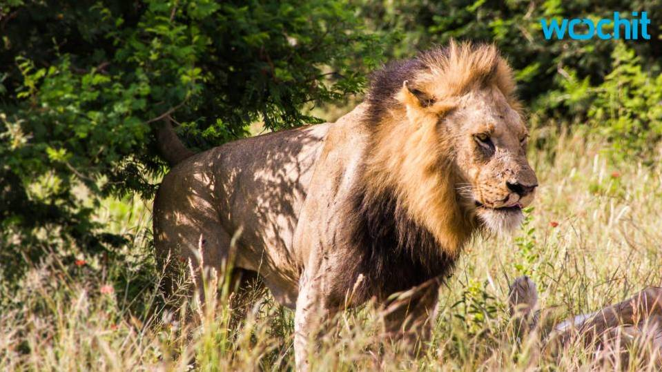 Lion kills American tourist in game park