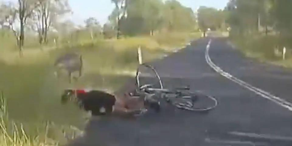 Kangaroo appears out of nowhere and crashes into cyclist