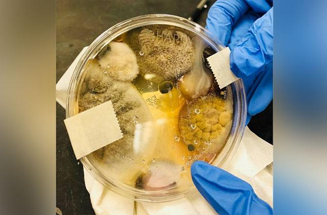 A woman claims she grew this vile-looking bacteria and fungi from inside a public hand dryer in just three minutes. Source Facebook  Nichole Ward