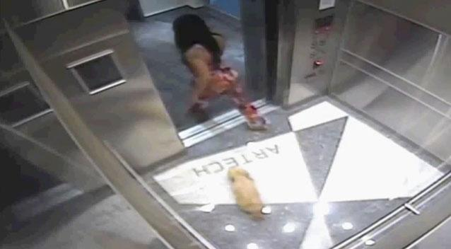 Woman Charged After Video Shows Her Stomping On Dog In Elevator