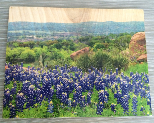 Bluebonnet Field On Wood