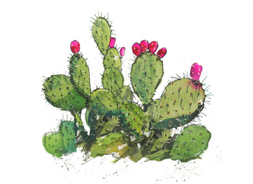 Cactus Group-4.25x5.5 Card