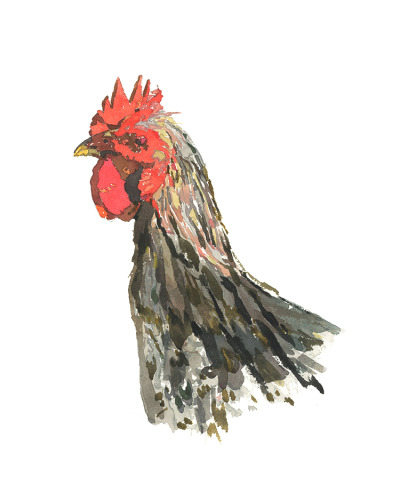 Chicken Red-16x20