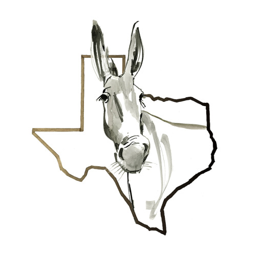 Texas Donkey BW 1-4.25x5.5 Card