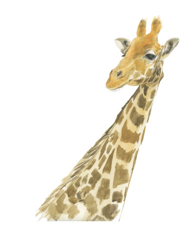 Giraffe Color-11x14