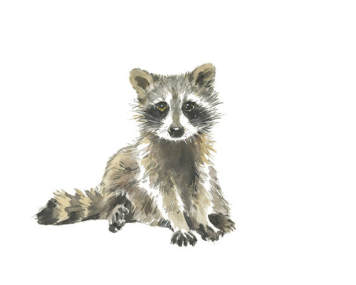 Baby Raccoon-8x10