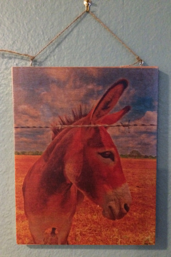 8x10 Donkey Days on Wood