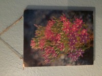 8x10 Fredericksburg Flowers on Wood