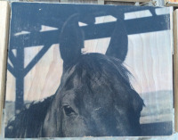 8x10 Carbondale Horse Stare on Wood