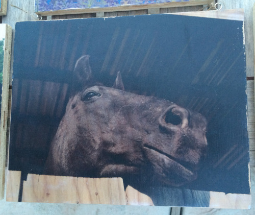 8x10 Carbondale Horse on Wood