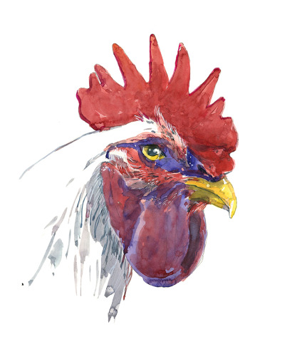 Rooster Stare-11x14