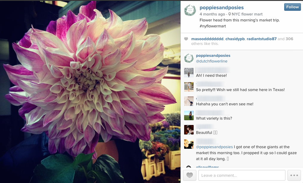 Poppies and Posies shares gorgeous photos of their flowers & arrangements on Instagram