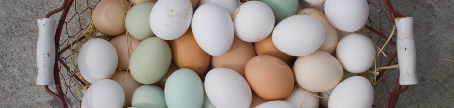 colored-eggs-header