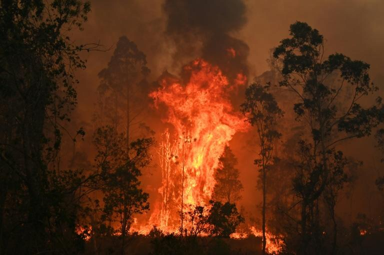 Fires raged in Bobin, with flames soaring 10 metres along the tree canopy
