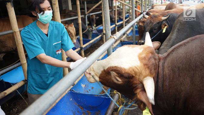 Petugas Dinas Peternakan dan Pertanian memeriksa gigi dan kesehatan sapi kurban di Mall Hewan Kurban H. Doni, Depok, Jawa Barat, Senin (29/7/2019). Pemeriksaan guna menjamin kelayakan dan kesehatan medis hewan kurban untuk dikonsumsi pada Idul Adha mendatang. (Liputan6.com/Immanuel Antonius)