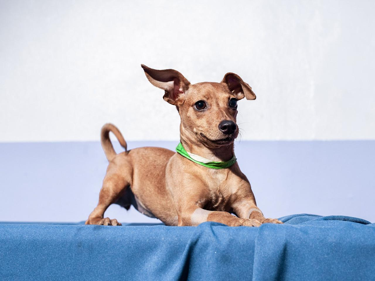"""<p>National Mixed Breed Dog Day is December 2nd (and July 31st) and we are celebrating with photos of the most adorable mutts we could find. These pups come from all around the nation and are mostly available for adoption. It's important that we remember to adopt pups from local shelters whenever possible. <a href=""""https://www.aspca.org/animal-homelessness/shelter-intake-and-surrender/pet-statistics"""" target=""""_blank"""">670,000 shelter dogs are euthanized every year</a> and a big percentage of those pups are mixed breed. Organizations like the <a href=""""https://www.aspca.org/"""" target=""""_blank"""">ASPCA</a> and <a href=""""https://www.thesatoproject.org/"""" target=""""_blank"""">The Sato Project</a> are committed to helping these cute doggies. Check out some of the most lovable best friends we could find.  </p>"""