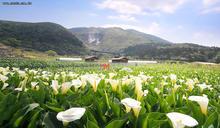竹子湖半日遊開放報名 30家鹹酥雞齊聚高雄
