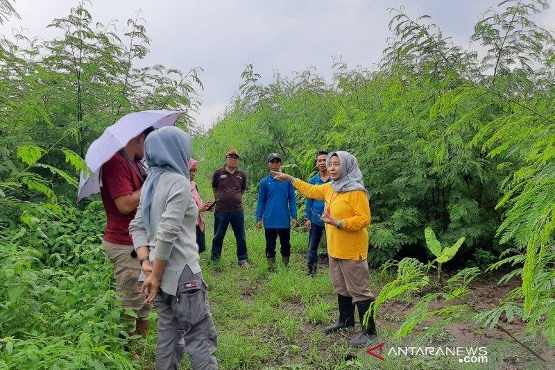 Pemprov NTB pastikan lima desa siap menerima bantuan sapi impor