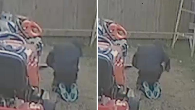 The child can be seen bending over and striking the puppy in the backyard of the Oklahoma home.