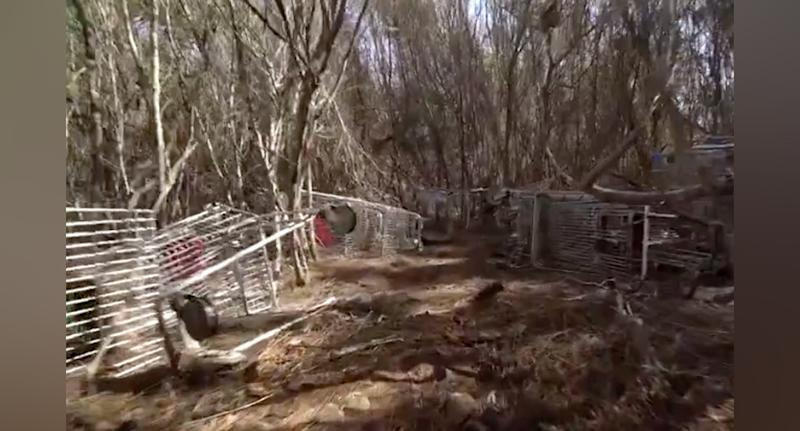Hundreds of trolleys were dumped in Sydney's Garigal National Park