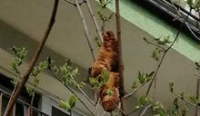 「樹上有神秘無頭怪物,快來抓牠」波蘭女子驚恐求助 反轉結局讓人糗大