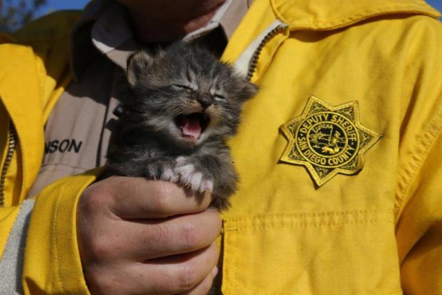 San Diego Sheriff Deputies Rescue Box of Kittens