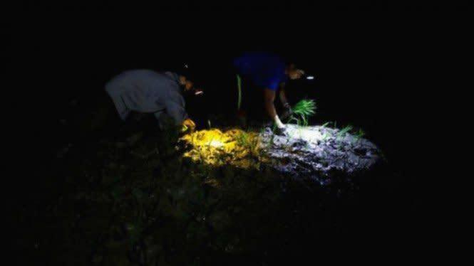 Hebatnya Petani Vietnam Terpaksa Bertani Malam karena Cuaca Ekstrem