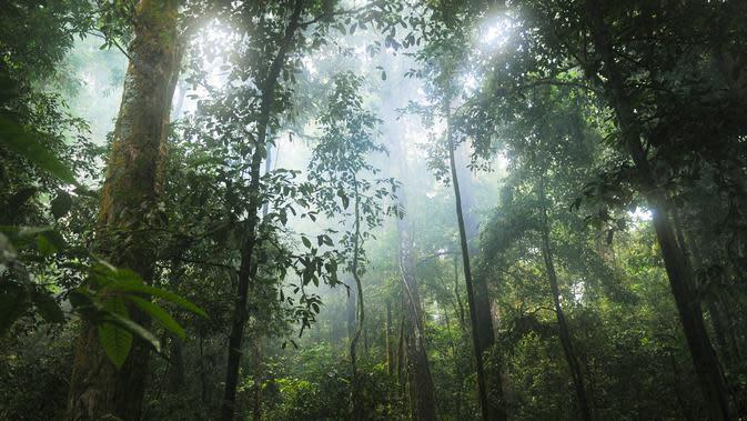 Hutan Hujan Tropis (Sumber: Pixabay)