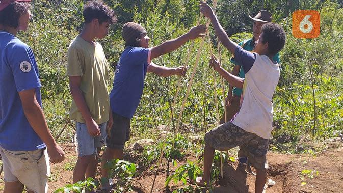 Tak Sudi Cuma Ngojek di Perantauan, Milenial di NTT Bikin Kelompok Tani Holtikultura