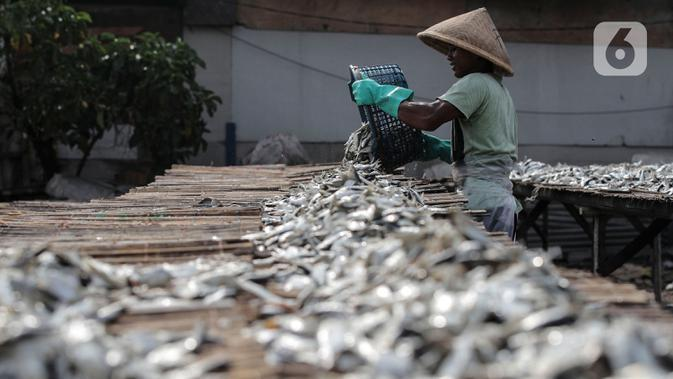 Pekerja saat menjemur ikan di kawasan Kampung Nelayan Muara Angke, Penjaringan, Jakarta Utara, Selasa (29/9/2020). Menurut nelayan, penjualan ikan asin saat pandemi COVID-19 tidak terlalu terpengaruh karena ikan merupakan bahan makanan yang diperlukan banyak warga. (Liputan6.com/Johan Tallo)