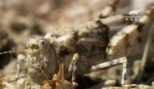 蟲蟲界交配神技 竟可媲美印度慾經