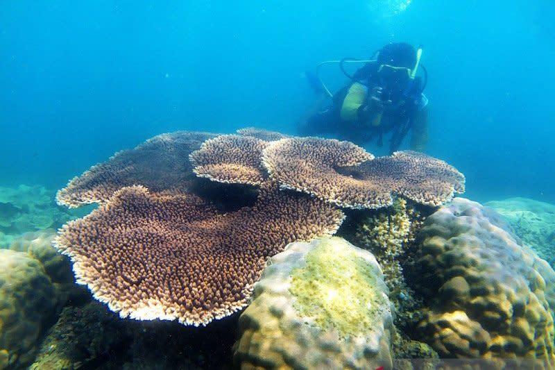 Kemenparekraf apresiasi pariwisata Belitung kembali menggeliat