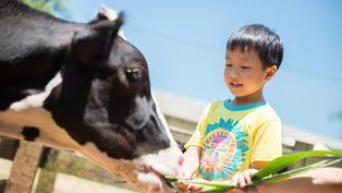 過年走春要去哪裡?牛年走春推薦!全台4大歐風牧場擠牛奶、餵牛寶寶喝ㄋㄟㄋㄟ