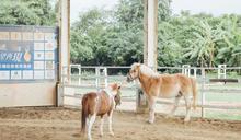 【人物】馬術物理治療師 詹淑雅 堅定陪伴讓馬背上出現奇蹟