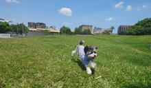 Xperia 1 ll 推薦嗎?該買嗎?加入蔡司的專業攝影鏡頭 全新 Photo Pro 寵物攝影用手機拍就行!